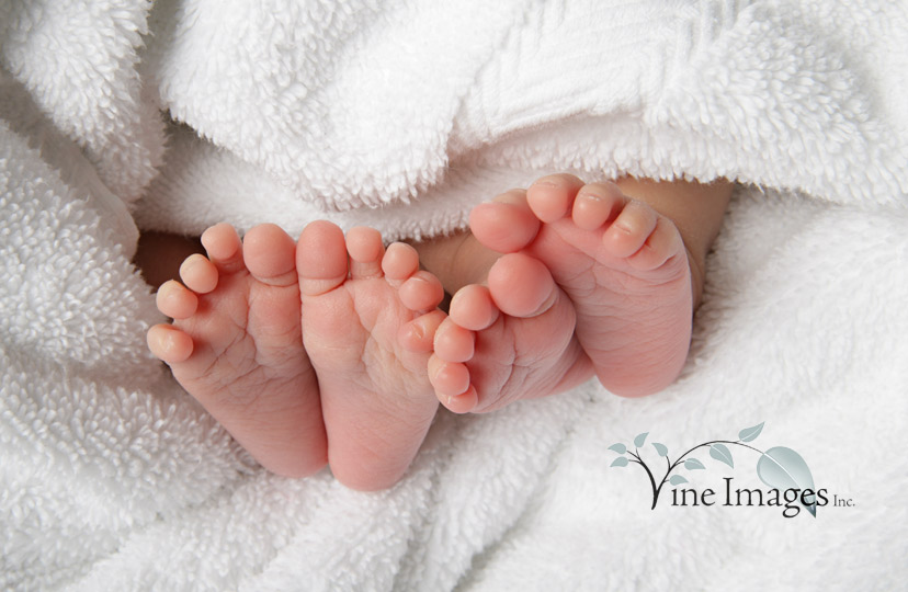 newborn twin picture ideas - ideas for twins on Pinterest